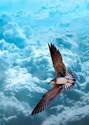 A sea gull soars above puffy teal clouds trying to reach the heavens