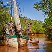 People try to sail a large boat through tiny waterways inside  mangroves in the western coastal region of Madagascar. <br /> <br /> A mangrove, a shrub or small tree that grows in coastal saline or brackish water, are key to a healthy marine ecology, providing shelter to crabs and shrimps, and reducing soil erosion. Birds, sea turtles, and dugongs, an endangered marine sea mammal, all use mangroves. The land-sea barrier is also an extremely efficient way to retain CO2, thus contributing to climate protection, says WWF. <br /> <br /> Yet, rising sea levels, human activities, and cyclones, have harmed these valuable ecosystems, leading to decline everywhere in Madagascar. <br /> <br /> The community of Ambakivao works daily, with the support of WWF, for the sustainable management of nearly 3,000 hectares of mangrove forests. WWF teaches fishermen, who hunt for crabs living in the mangrove, to maintain or increase their food production without destroying the delicate habitat. <br /> <br /> <br /> Madagascar is the world's forth largest island off the coast of east Africa.