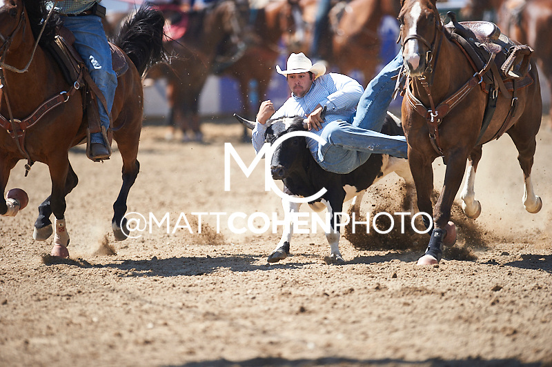 Steer wrestler Austin Tyler of Lincoln, CA competes at the Redding Rodeo in Redding, CA<br /> <br /> <br /> UNEDITED LOW-RES PREVIEW<br /> <br /> <br /> File shown may be an unedited low resolution version used as a proof only. All prints are 100% guaranteed for quality. Sizes 8x10+ come with a version for personal social media. I am currently not selling downloads for commercial/brand use.