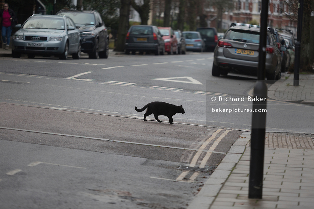 A black cat crosses the road, on 20th December 2017, in London, England.