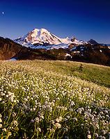 Mount Baker from wildflower meadows of Skyline Divide, Mount Baker Wilderness Washington