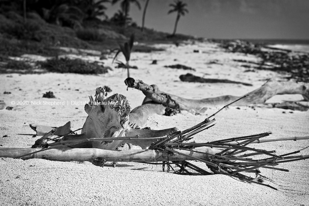 Driftwood on a Caribbean beach in black and white.