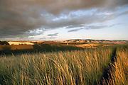 Sunset illuminates the countryside near Bennington Lake in Walla Walla. (Erika Schultz / The Seattle Times)
