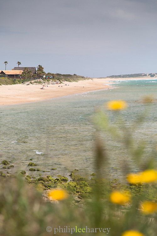 View of beach with flowers in foreground, Cadiz, Andalusia, Spain