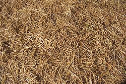 Field of hay,