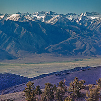 Ancient Bristecone Pines grow at high altitudes in the White Mountains above the dramatic Owens Valley and eastern Sierra escarpment in the background.