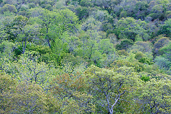Trees, Hill Country between Blanco and Fredericksburg, Texas, USA