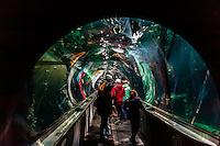 Aquarium of the Bay, Fisherman's Wharf, San Francisco, California USA