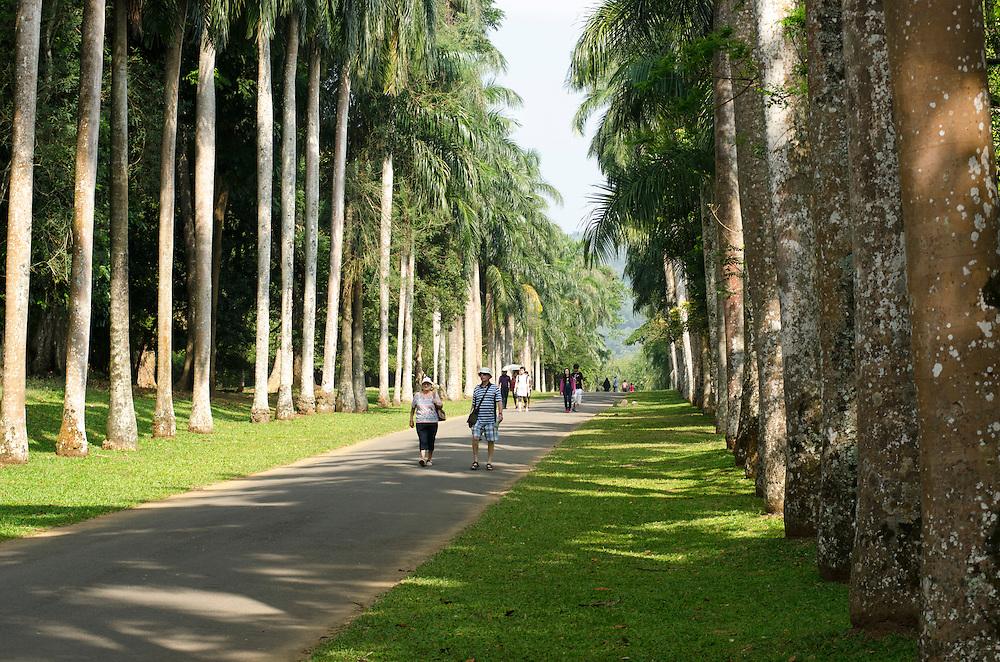 People walking along Cabbage Palm Avenue, Royal Botanical Garden, Kandy, Sri Lanka
