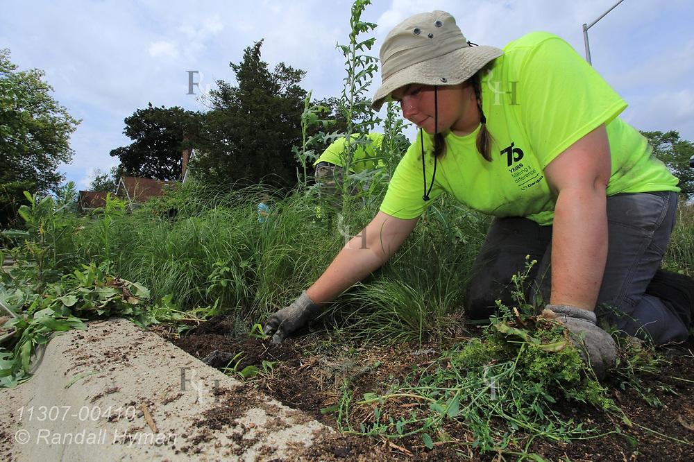 Cardno Field Supervisor Allison Sahs weeds rain garden in Chicago South Side neighborhood to help control stormwater runoff into Lake Michigan; Blue Island, Illinois.