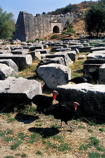 Turkeys roam through the ruins of the Lycian site of Letoon off the Turquoise Coast in Southern Turkey