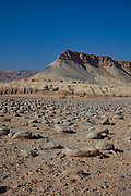 Israel, Negev Desert landscape. The Bulbus rock field in front of Mount Zin. Bulbus is an Arabic name for potatoes. These potato shaped rocks are found in the thousands near Mt Zin, Negev Desert, Israel