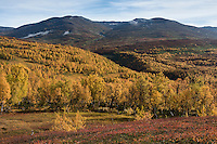 Autumn mountain landscape viewed from Kungsleden trail near Hemavan, Lapland, Sweden
