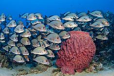 Andaman Islands Underwater
