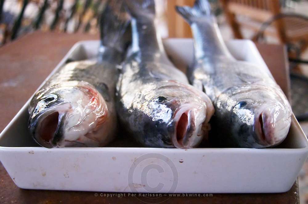 How to prepare fish baked in the oven in salt crust (en croute de sel), recipe, series of pictures: one two three fresh fish on a white serving dish, glistening fresh from the sea Clos des Iles Le Brusc Six Fours Cote d'Azur Var France