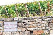 Vineyard. Maison Louis Jadot, Rugiens. Pommard, Cote de Beaune, d'Or, Burgundy, France