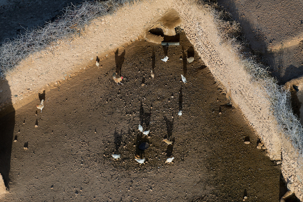 Aerial view of chicken in the countryside of Marrakech, Morocco.