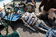 A papier mache skeleton lies in the road during a protest against climate change in Piccadilly Circus on 15th April, 2019 in London, United Kingdom.  Extinction Rebellion have blocked five central London landmarks in protest against government inaction on climate change. The youth group within Extinction Rebellion was based at Piccadilly Circus..