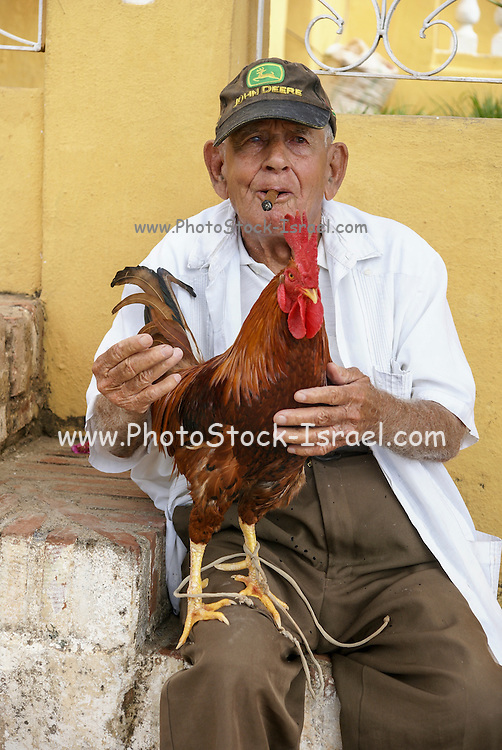 Cuba, Trinidad. Cock fighting