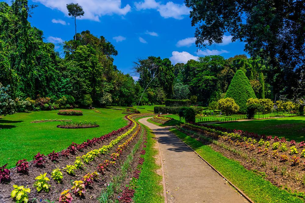 Royal Botanical Gardens, Peradeniya, Kandy, Central Province, Sri Lanka.