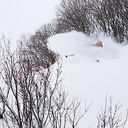 Tanner Flannagan skis in-bounds powder at Jackson Hole Mountain Resort.