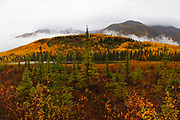 Autumn in America's largest National Park, Wrangell - St. Elias.