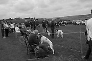 Most handsome dog competition, , Rye and District County Show, Icklesham. 17 August 2019