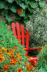 Red painted chair in the oast garden. Helenium in the foreground, Vitis coignetiae, vine on the wall
