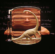 Jim Farlow, paleontologist with Indiana Univ. uses a displacement theory developed by R. McNeill Alexander of the Univ. of Leeds in England to calculate the weight of Mamenchisaurus at about twenty-three tons.