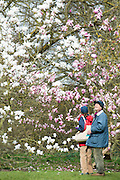 © Licensed to London News Pictures. 17/03/2014. Kew, UK People walk through a colourful display of magnolias. People enjoy the occasional sunshine at Kew Gardens today 17th March 2014. Photo credit : Stephen Simpson/LNP