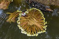 Sirajdikhan, Bangladesh - 19 July 2020: Aerial view of a farmer washing white lilies along Ichamati river in Dhaka region, Bangladesh.