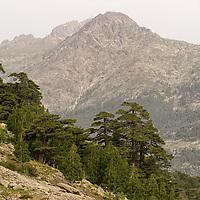 "Still walking from Poppaghia to ""Lac de Nino""."