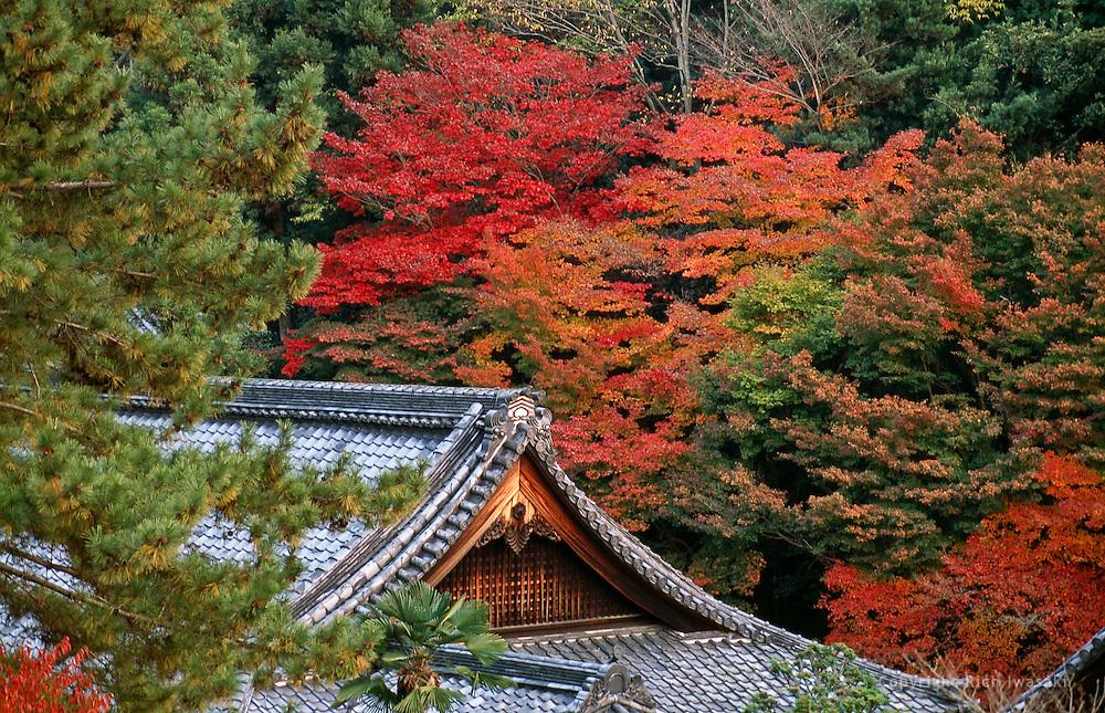 View of autumn colors at Nanzen-ji (temple), Kyoto, Japan