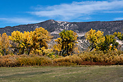 Images of Fall Colours from New Mexico USA