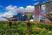The Supertree Grove and Marina Bay Sands from the OCBC Skyway at Gardens by the Bay, Singapore, Republic of Singapore