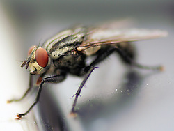 Feature, Fliegenmakro, EXPA Pictures © 2011, PhotoCredit: EXPA/ S. Kiesewetter