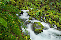 Ruckel Creek, Columbia River Gorge National Scenic Area, Oregon