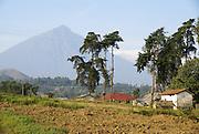 Rwanda, Volcanoes National Park (Parc National des Volcans)