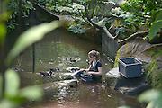 Nederland, Arnhem, 12-2-2013De Bush, onderdeel van Burgers zoo. Groot kunstmatig stuk regenwoud, jungle. Een verzorgster staat in het water en voertt de waterdieren. Bezoekers in dierentuin. Recreatie.Foto: Flip Franssen/Hollandse Hoogte