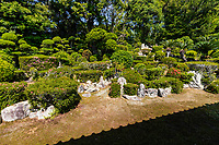 """Ioji Temple Garden is composed of two main gardens:  The Garden of Dry Mountains and Waters which has been attributed somewhat erroneously to Kobori Enshu, who once visited the temple. Directly south of the main hall is the so-called Water Garden although there is no pond nor waterfall, it may be called that for the undulating shrubs give the impression of water.  Ioji Temple Gardens use the style of landscape gardening of the early Ido period using a very large space - an area of 1,000 square meters from the north garden to the reception hall once used for state ceremonies. Old garden of dry landscape Japanese garden has another view that uses the garden designs of Enshu Kobori.  Although there is no specific record of Enshu actually taking part of the design of the garden, its style conforms to Enshu's style and he did indeed visit here at one time. The three prominent stones at the top of the hillock are the showcase of the garden and its main focal point. The shrubs surrounding the stones are satsukiin bloom in May. On the south side of the main hall, the design of the """"Water Garden"""" is more gentle with sculpted shrubs, adding stillness and contrast to the adjacent western garden.  There is also a small garden in front of the main hall, covered with moss called """"Moss Garden of Tokai""""."""