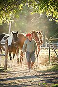 Gaucho leading horses through gate, Estancia Huechahue, Patagonia, Argentina, South America