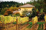 Southern Oregon Vineyards