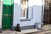 Dog on Street in Wexford, Ireland