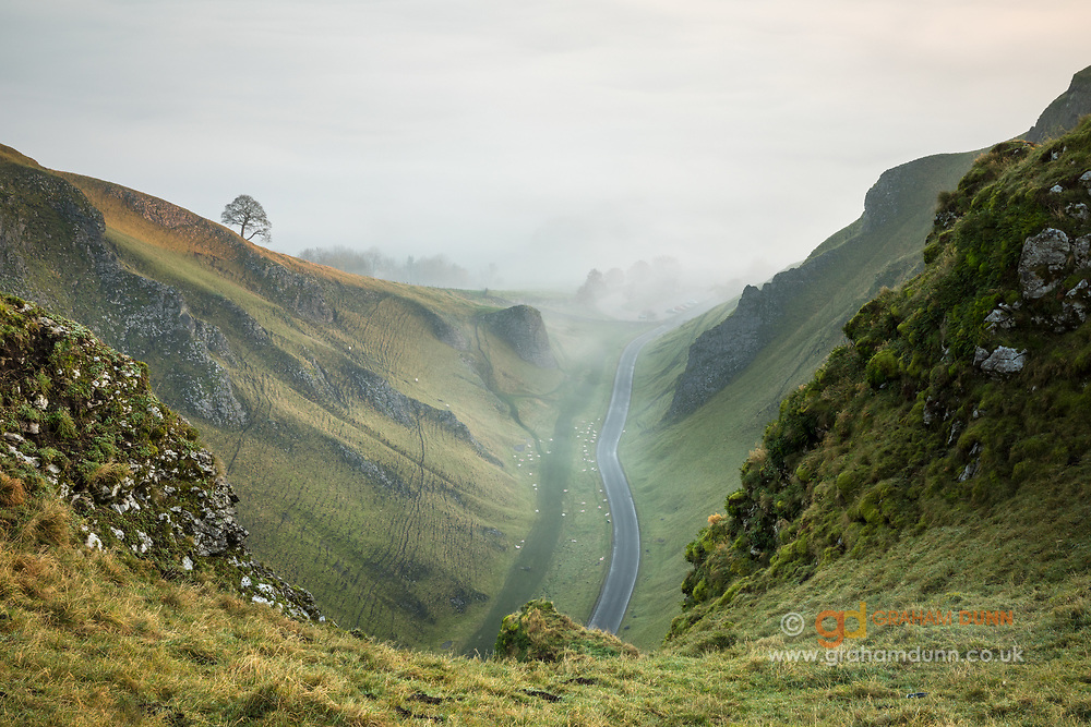 Mists, from a temperature inversion in the Hope Valley, creep up Winnats Pass on a glorious autumn morning in the Peak District. Golden sunlight catches the lone tree & adjacent hillside. An atmospheric scene in Derbyshire, England, UK.
