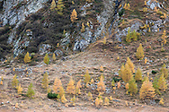 Autumn colours above the Stausee Margaritze, on the Alpe Adria Trail near the Grossglockner, Carinthia, Austria (October 2015) © Rudolf Abraham
