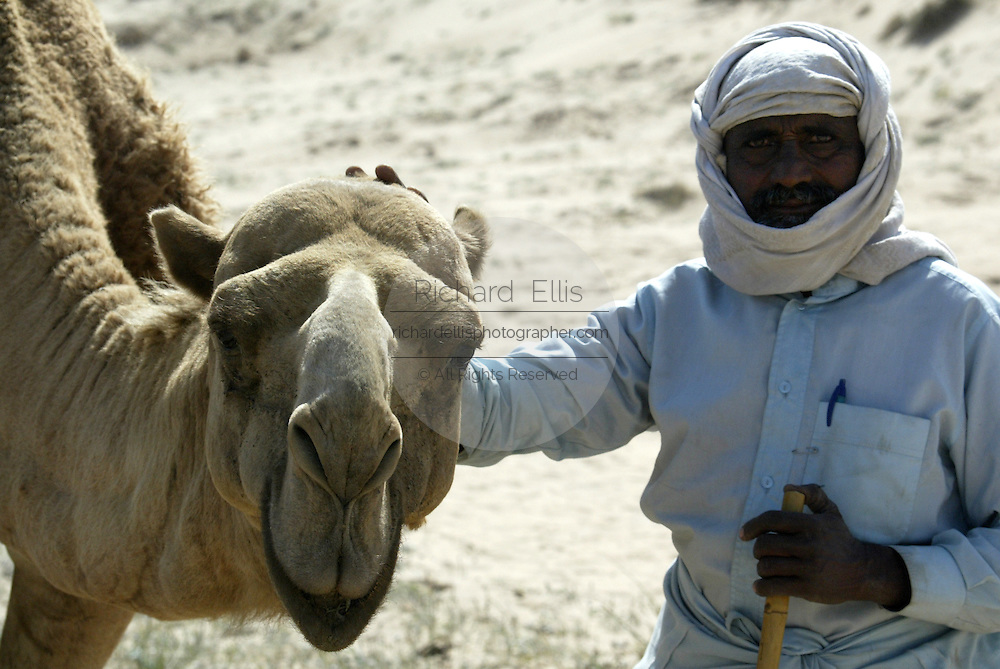 A Kuwaiti nomand with a dromedary camel in the desert of northern Kuwait near the Iraq border.