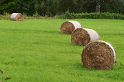 Cut field with hay bales. Smaland region. Sweden, Europe.