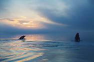 Humpback whales near Pinta Point, Alaska