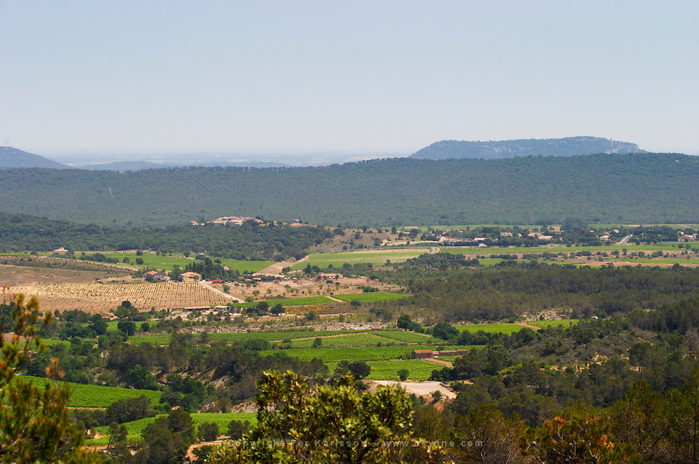Domaine Cazeneuve in Lauret. Pic St Loup. Languedoc. France. Europe. Vineyard. Mountains in the background.