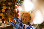 Dates being inspected by a date farmer in Arizona shot as a Environmental Portraiture on a Canon 5D Mark III